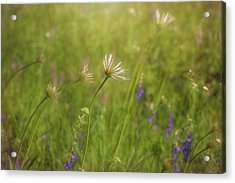 Field Of Flowers Acrylic Print