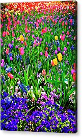 Field Of Flowers Acrylic Print by Tamyra Ayles