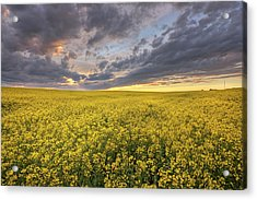 Acrylic Print featuring the photograph Field Of Gold by Dan Jurak