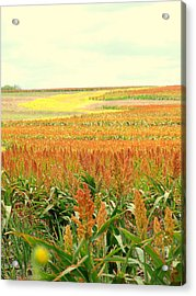Field Of Gold Acrylic Print by James Granberry