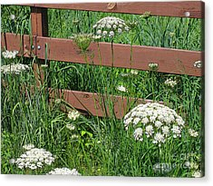Acrylic Print featuring the photograph Field Of Lace by Ann Horn