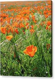 Field Of Orange Poppies- Art By Linda Woods Acrylic Print