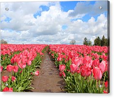 Field Of Pink Acrylic Print