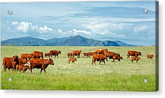 Field Of Reds Acrylic Print