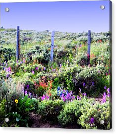 Acrylic Print featuring the photograph Field Of Wildflowers by Karen Shackles