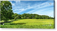 Field Of Yellow Acrylic Print by Adrian Evans