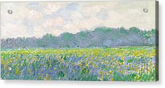 Field Of Yellow Irises At Giverny Acrylic Print