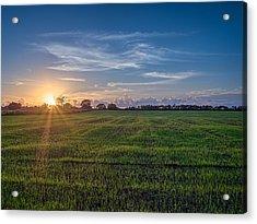 Field Sunset Acrylic Print