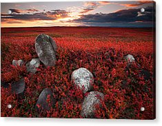 Fields Of Autumn Acrylic Print