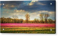 Fields Of Clover Acrylic Print by James Barber