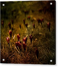 Fields Of Elegance Acrylic Print by Loriental Photography
