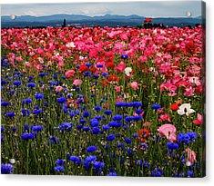 Fields Of Flowers Acrylic Print