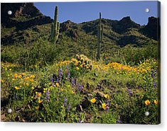 Fields Of Glory Acrylic Print by Lucinda Walter