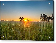 Fields Of Gold Acrylic Print by Az Jackson