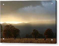 Fields Of Gold Acrylic Print by Holly Ethan
