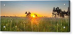 Fields Of Gold Panorama Acrylic Print