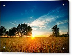 Fields Of Gold Acrylic Print by Ryan Heffron