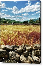 Fields Of Gold Acrylic Print by Stephan Grixti