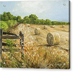 Fields Of Hay Acrylic Print