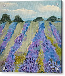 Fields Of Lavender Acrylic Print