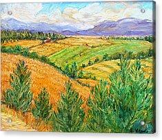 Fields Of Summer Acrylic Print by Ethel Vrana