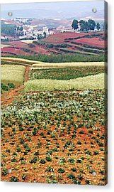 Fields Of The Redlands - 2 Acrylic Print