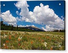 Fields Of Wildflowers Acrylic Print by Dennis Wagner