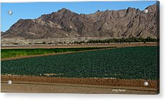 Fields Of Yuma Acrylic Print