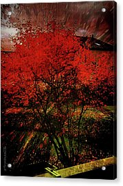Acrylic Print featuring the photograph Fiery Dance by Mimulux patricia no No