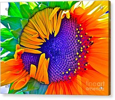 Fiesta Acrylic Print
