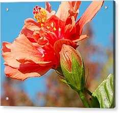 Fiesta Time Acrylic Print by Jean Booth