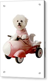 Fifi Is Ready For Blas Off Acrylic Print by Michael Ledray