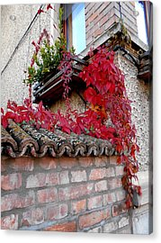 Fifty Shades Of Autumn - 12. Acrylic Print