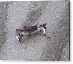 Acrylic Print featuring the photograph Fighting Crab by Angi Parks