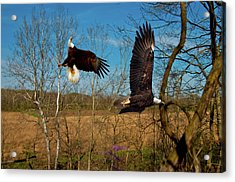 Fighting Eagles Acrylic Print