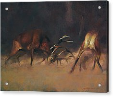 Fighting Stags I. Acrylic Print