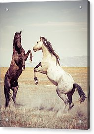Acrylic Print featuring the photograph Fighting Stallions by Mary Hone