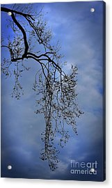 Acrylic Print featuring the photograph Filigree From On High by Skip Willits
