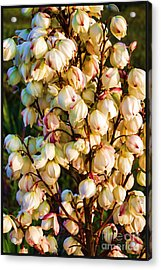 Filled With Joy Floral Bunch Acrylic Print