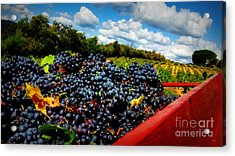 Filling The Red Wagon Acrylic Print