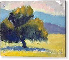 Filoli Oak Acrylic Print