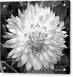 Acrylic Print featuring the photograph Filter Series 101 by Jeni Gray