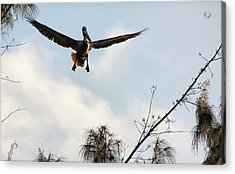 Acrylic Print featuring the photograph Final Approach by David Buhler