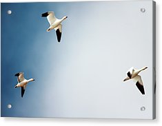 Final Approach Of 3 Acrylic Print by Todd Klassy