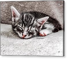 Finally Asleep  Copyright Mary Lee Parker 17  Acrylic Print by MaryLee Parker