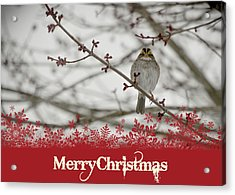 Finch Christmas Acrylic Print by Trish Tritz