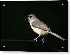 Acrylic Print featuring the photograph Finch by Heidi Poulin