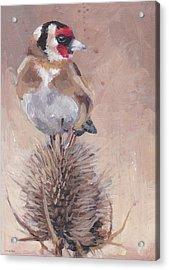 Finch On Thistle Acrylic Print