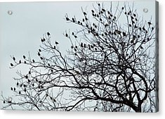 Finches To The Wind Acrylic Print