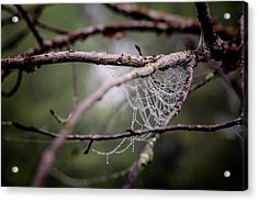 Find Comfort In The Chaos Acrylic Print